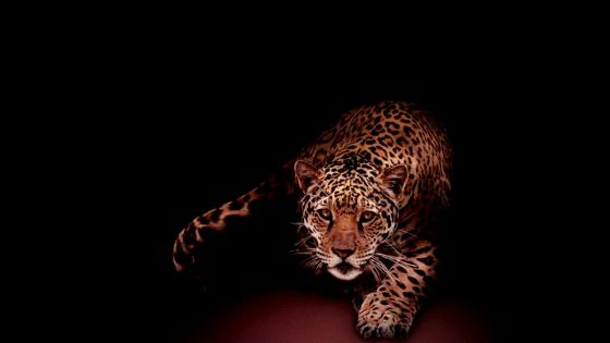 Red Jaguar dark bg wallpaper