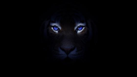 Blue-eye tiger wallpaper