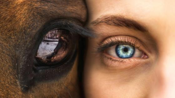 Horse Eye And Woman Eye wallpaper