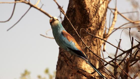 Bird in nature wallpaper