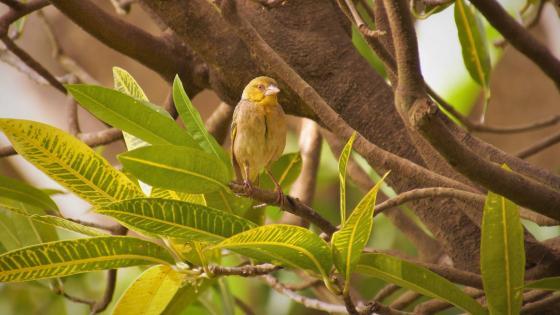 Bird in tree wallpaper