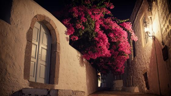 Bougainvillea at night wallpaper