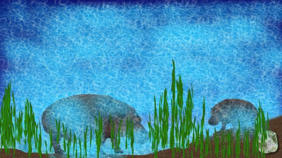 Hippopotamus in the river wallpaper