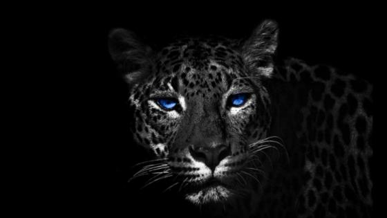 Blue eye jaguar wallpaper
