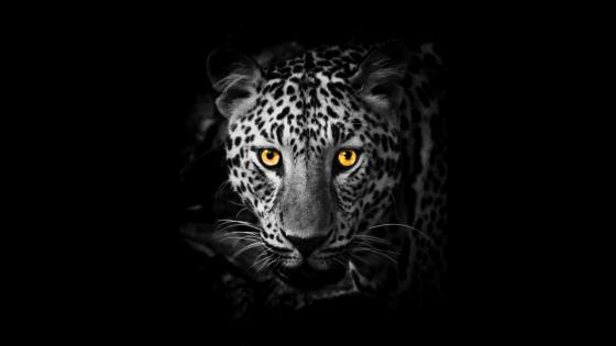 Yellow-eye Jaguar wallpaper
