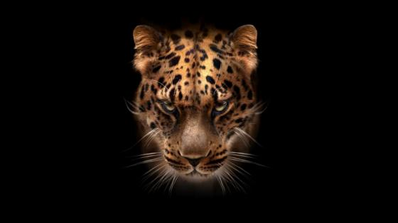 Dark-gold Jaguar wallpaper