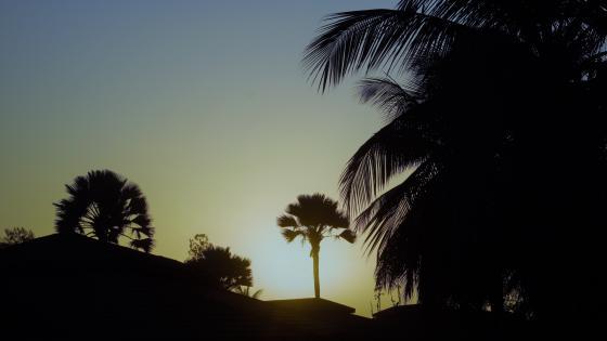 Sonnenuntergang unterPalmen wallpaper