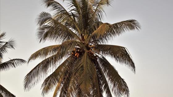 Palmen im Paradies wallpaper