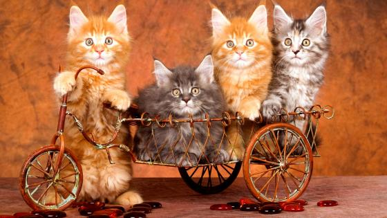 Young Kittens wallpaper