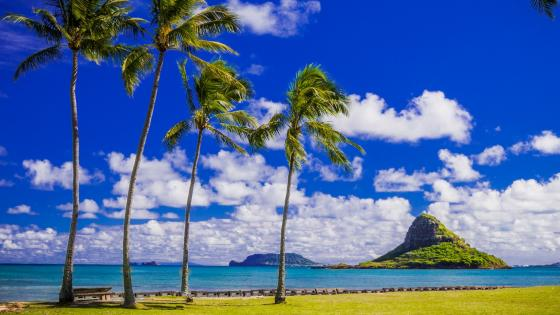 Hawaii wallpaper