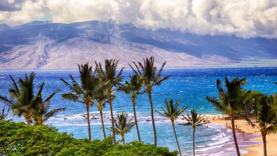 Coconut trees near sea wallpaper