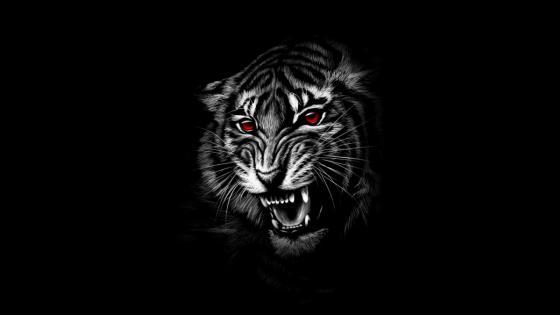Red eye Tiger wallpaper