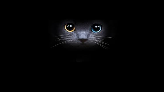 Beauty cat eyes wallpaper