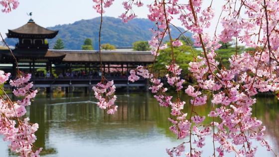 Spring in Kyoto wallpaper