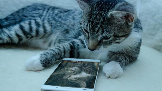 Cat with a cell phone wallpaper