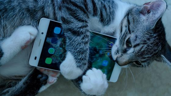 Cat with cell phone wallpaper