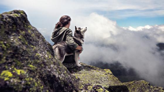 Girl with a Siberian Husky wallpaper