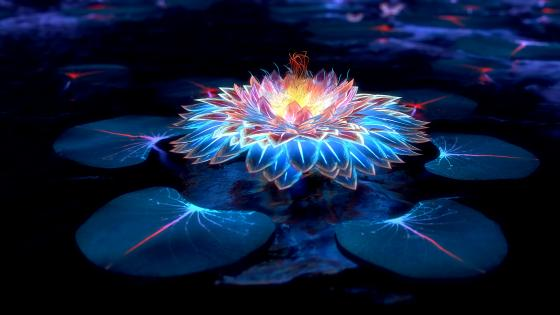 Glowing lotus flower wallpaper