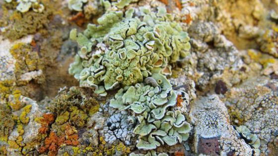 Algae wallpaper