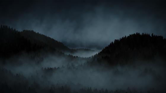 misty forest wallpaper
