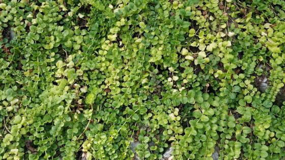 Leaves on stones wallpaper