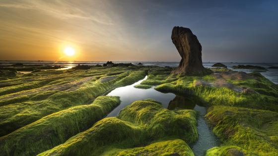 Algae stones wallpaper