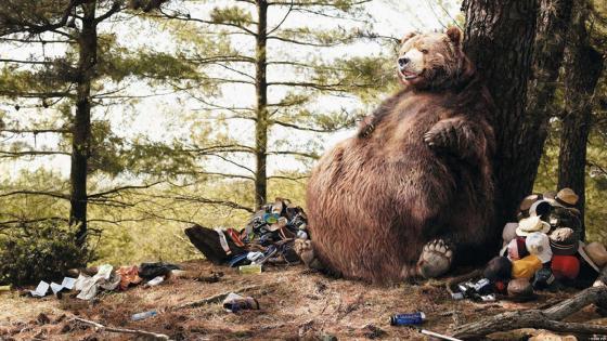 Satiated bear wallpaper
