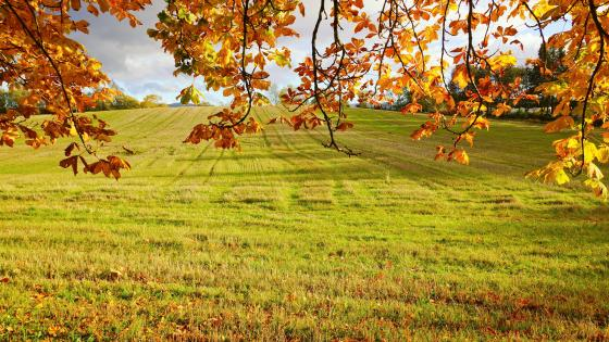Fall scenery wallpaper
