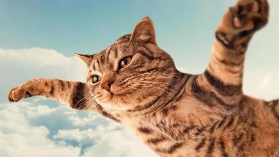 Flying cat wallpaper