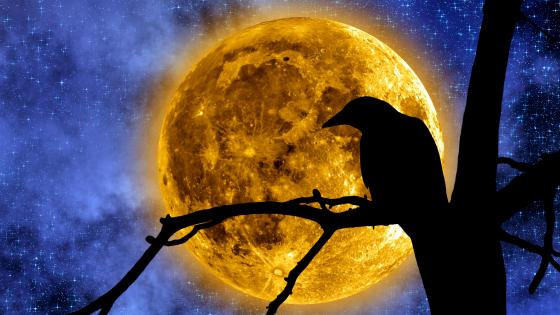 Crow silhouette in the full moon wallpaper
