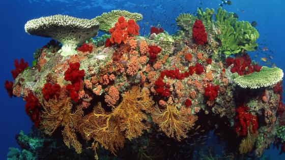 Belize Coral Reef Nature Reserve wallpaper
