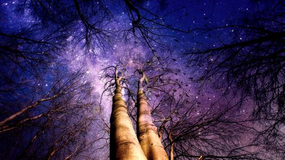 Branches Of Trees Towards The Starry Sky wallpaper