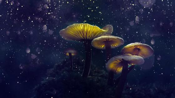 Magical mushrooms wallpaper