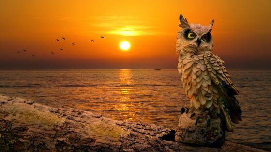Artificial owl in the Sunset wallpaper