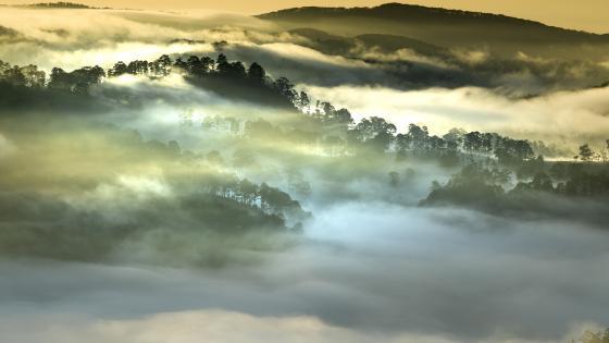 Vietnam jungle morning fog wallpaper