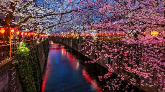Meguro River wallpaper