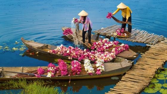 Rural Women Harvest Water Lily Flowers By Boat In The Mekong River Delta wallpaper