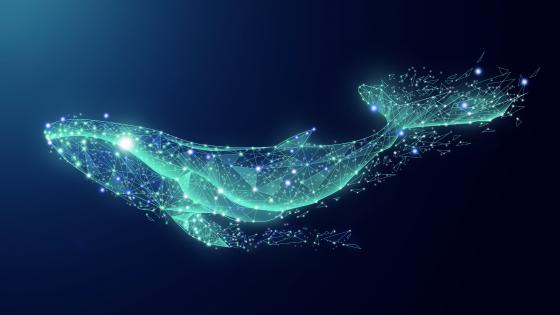 Blue whale wallpaper