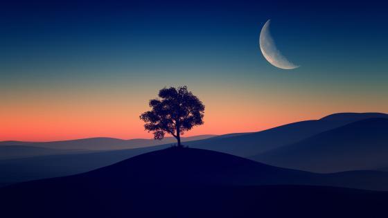 Tree Alone Dark Evening wallpaper
