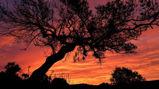 Landscape In Sunset With Tree wallpaper