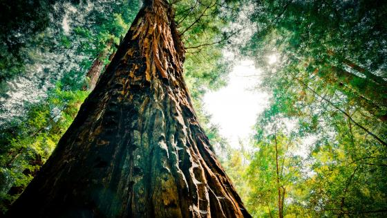 Redwood National Park wallpaper