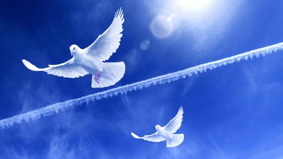 Doves of peace wallpaper