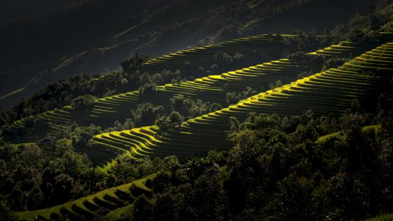 Rice terraces, Vietnam wallpaper