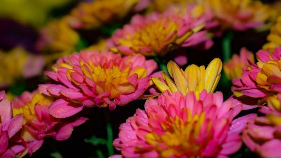 Sweet flowers wallpaper