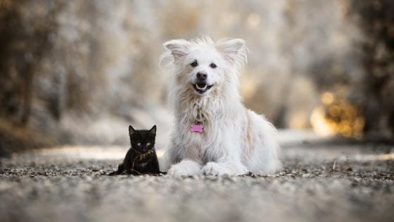 White dog and black cat wallpaper