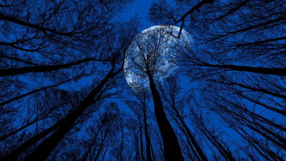 Full Moon In The Trees wallpaper