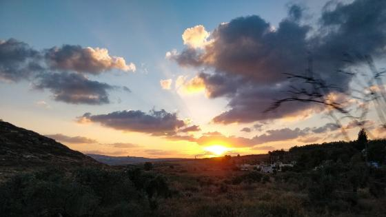 Sunset and olive trees wallpaper