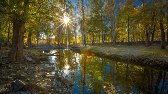 Early fall sunbeam reflection wallpaper