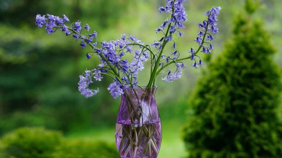 Blue flowers in purple vase wallpaper