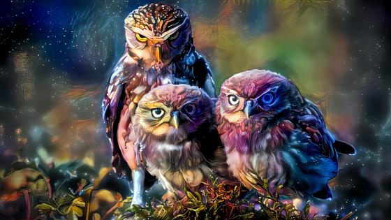 Fantasy owls wallpaper